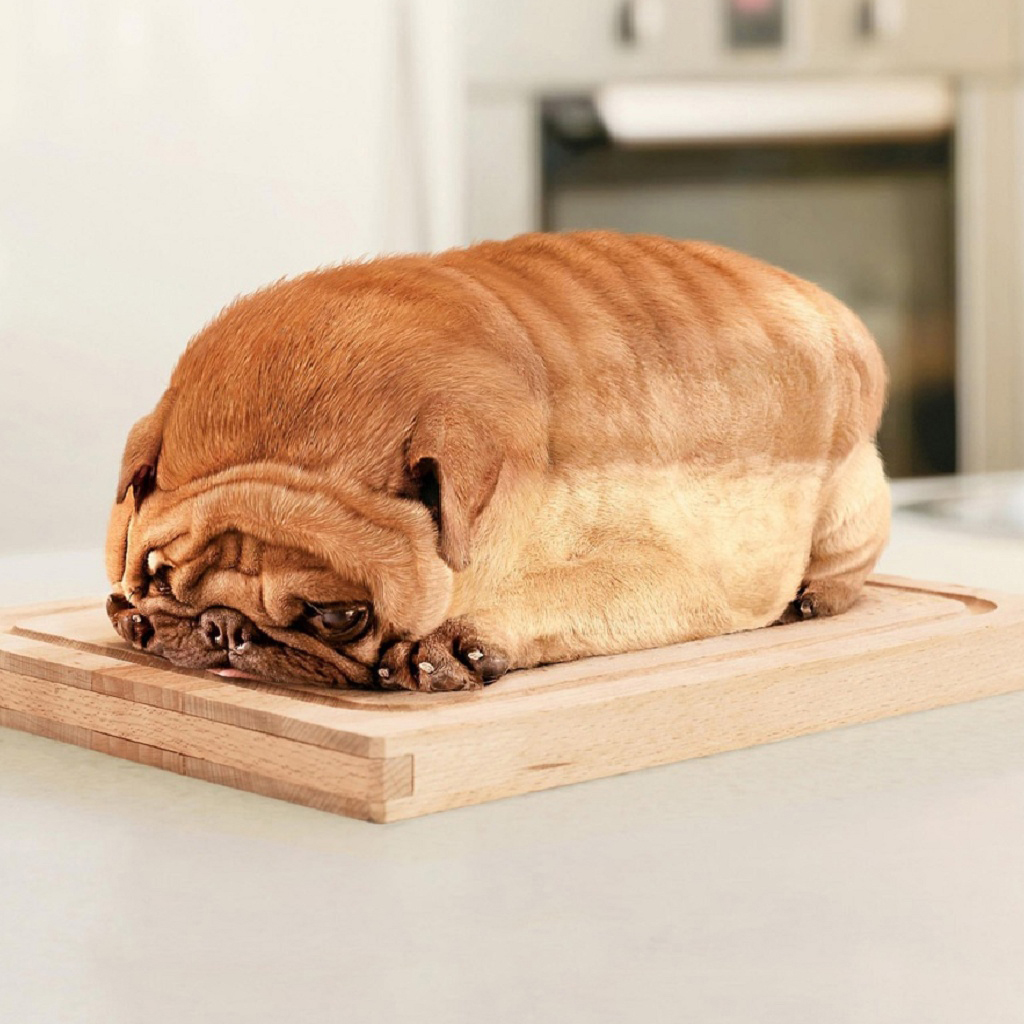 Loaf of Dog