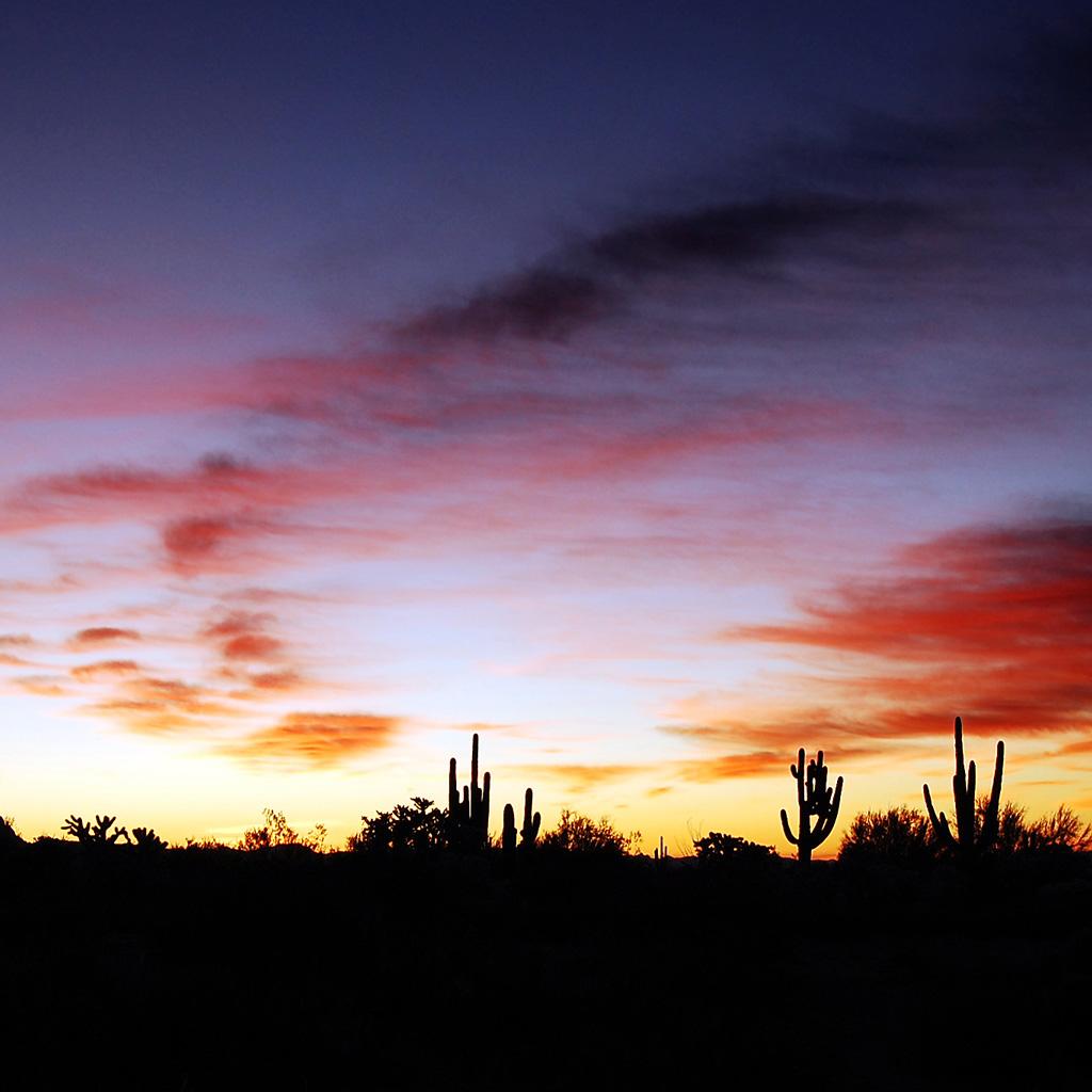 Cactus Dusk