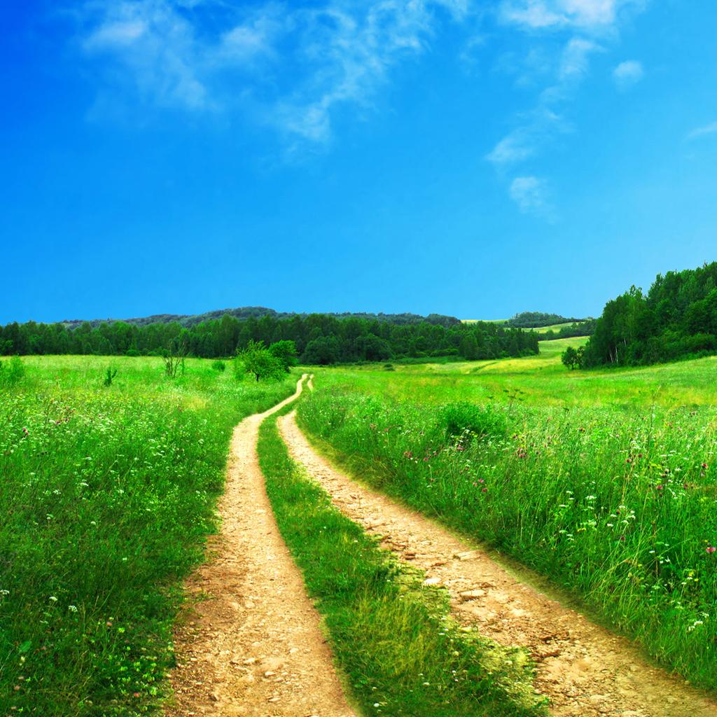 Grass Trail